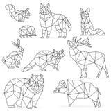 低多线被设置的动物 Origami poligonal线动物 狼熊鹿野公猪狐狸浣熊兔子猬 免版税图库摄影