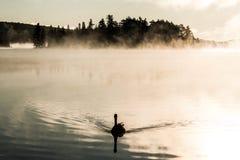 低头ake游泳阿尔根金族国家公园安大略加拿大日落日出的两条河有雾有雾的背景 图库摄影