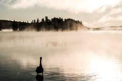 低头ake游泳阿尔根金族国家公园安大略加拿大日落日出的两条河有雾有雾的背景 库存图片