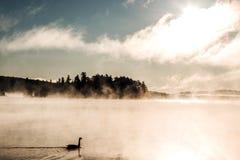 低头ake游泳阿尔根金族国家公园安大略加拿大日落日出的两条河有雾有雾的背景 免版税库存照片