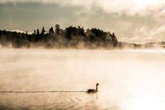 低头ake游泳阿尔根金族国家公园安大略加拿大日落日出的两条河有雾有雾的背景 免版税库存图片