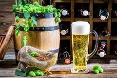 低度黄啤酒由新鲜的蛇麻草做成 免版税图库摄影