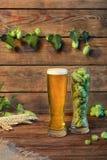 低度黄啤酒玻璃贮藏啤酒,皮尔逊,在木桌上的强麦酒在酒吧或客栈,木背景 图库摄影