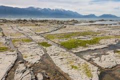 低潮中Kaikoura的海岸 免版税库存图片