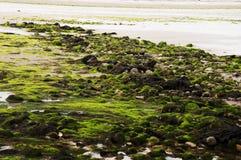 低潮残骸 库存图片