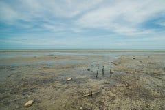 低潮泥泞的海边在马来西亚 免版税库存图片