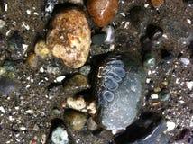 低潮-多岩石的海滩1 免版税库存照片