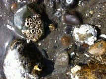 低潮-多岩石的海滩2 库存照片