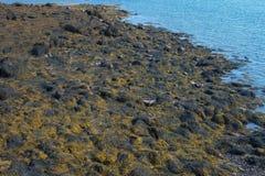 低潮暴露了在一个坚固性新英格兰海岸线陈列的岩石 免版税库存图片