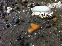低潮- barnacles2 库存图片