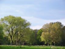 更低的莱茵河地区的典型的风景 免版税库存图片