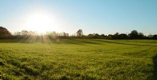 低秋天太阳发光在一个绿色草甸 免版税库存图片