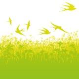 低空飞行的燕子 免版税库存图片