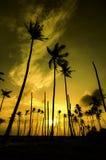 低角度在海滩附近的美好的早晨在日出日落期间 库存照片