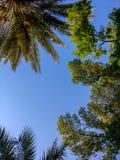 低角度射击了与蓝天的观看的美丽的树 免版税图库摄影