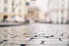 低角度射击了湿老路面在有浅焦点的塔林 库存图片