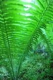 从低角度看见的绿色蕨 库存照片