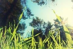 低角度观点的反对蓝天的新鲜的草与云彩 自由和更新概念 图库摄影