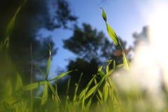 低角度观点的反对蓝天的新鲜的草与云彩 自由和更新概念 库存图片