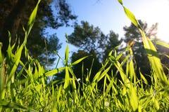 低角度观点的反对蓝天的新鲜的草与云彩 自由和更新概念 库存照片
