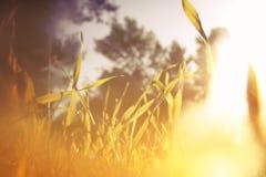 低角度观点的新鲜的草 自由和更新概念 葡萄酒被过滤的图象 库存图片