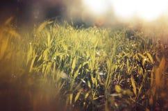低角度观点的新鲜的草 自由和更新概念 葡萄酒被过滤的图象 库存照片