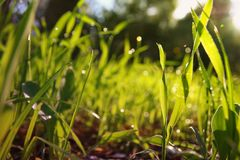 低角度观点的新鲜的草 自由和更新概念 库存照片