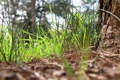 低角度观点的新鲜的草 自由和更新概念 免版税图库摄影