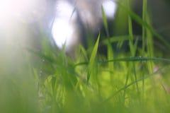 低角度观点的新鲜的草 自由和更新概念 免版税库存图片