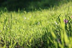 低角度观点的新鲜的草 自由和更新概念 免版税库存照片