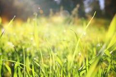 低角度观点的新鲜的草 自由和更新概念 库存图片