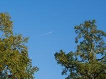 低角度视图到橡树里冠上与天空和飞机 免版税库存图片