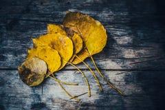 低调在湿秋天地板上的黄褐色叶子在公园 图库摄影
