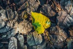 低调在湿秋天地板上的黄褐色叶子在公园 库存照片