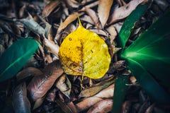 低调在湿秋天地板上的黄褐色叶子在公园 免版税库存照片