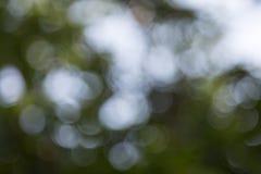 低调树背景抽象的Bokeh的模糊的照片  免版税库存照片