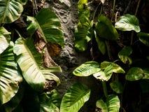 低调绿色叶子在森林里 库存照片