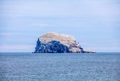 低音岩石,世界的最大的殖民地北Gannets 北部贝里克苏格兰英国 免版税库存图片