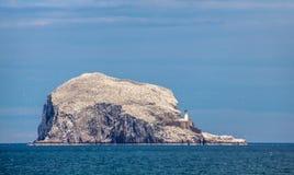 低音岩石,世界的最大的殖民地北Gannets 北部贝里克苏格兰英国 免版税图库摄影
