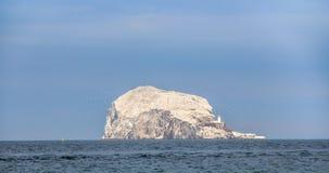 低音岩石,世界的最大的殖民地北Gannets 北部贝里克苏格兰英国 库存图片
