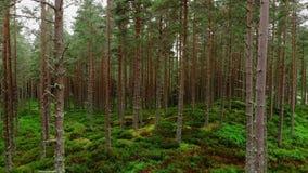 低飞行通过一个森林在苏格兰高地 股票录像