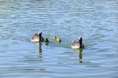 低头家庭在湖的一个晴天 免版税库存图片