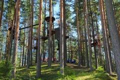 系住在树/绳索的足迹追猎在树 免版税库存照片