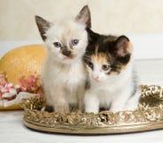住宅区的小猫 库存图片