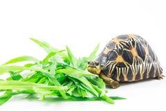 住宅系列地产爬行动物陆地龟乌龟 免版税库存照片