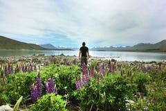 住梦想在新西兰 免版税图库摄影