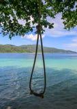 系住从一棵树的吊在美丽的海滩上 免版税库存图片