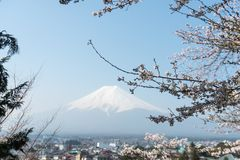 佐仓与富士山的樱花树在日本 库存照片