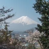 佐仓与富士山的樱花树在日本 免版税图库摄影