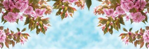 佐仓花在全景的天空的樱花特写镜头 8个看板卡eps文件招呼的包括的模板 浅深度 被定调子的软性 春天自然后面 免版税库存照片